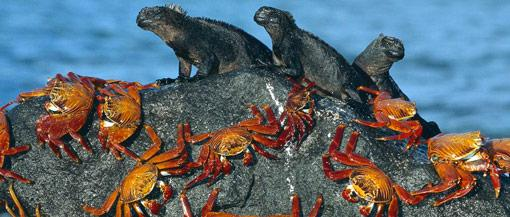 Galapagos Islands, west of Ecuador in the Pacific Ocean